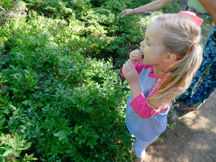 Marlowe Martino picks blueberries on a trail in Maine