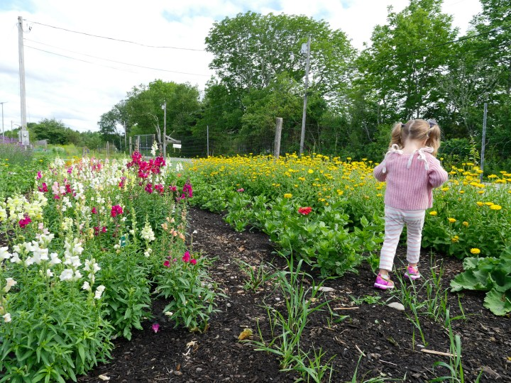 Marlowe walks through the gardens at Beech HIll Farm in Maine