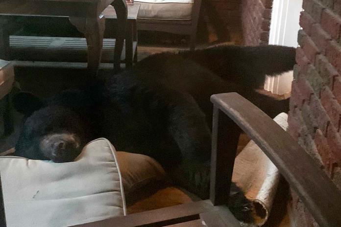 bear sleeps on porch