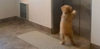 Excitable dog awaits her friend