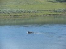 Yellowstone, Banff & Jasper, Brent & Luci's 043