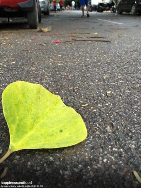 What if you were a leaf..