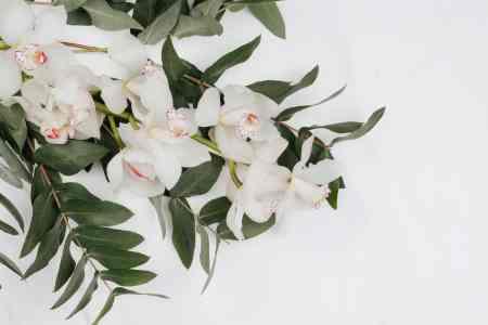 fleur sur fond blanc