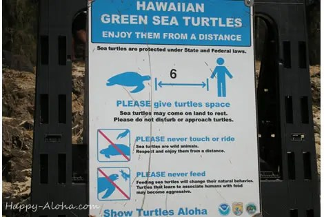 ウミガメ触るの禁止看板