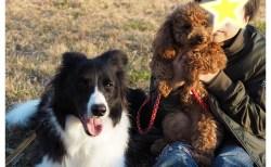 「うちの愛犬Jに」と、甥っ子からのお土産「わんこカステラ」♪