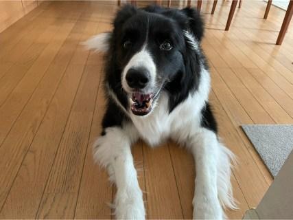 最近気になっていること~8歳愛犬の階段の上り下り~