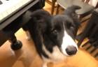 犬の好きな音♪ピアノの音は?