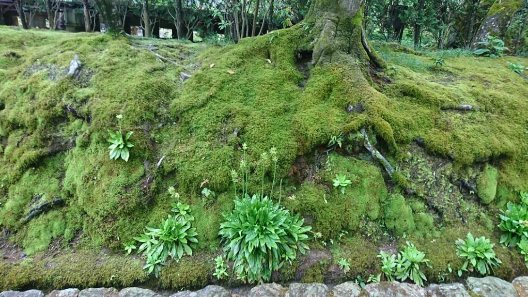 木の根と苔