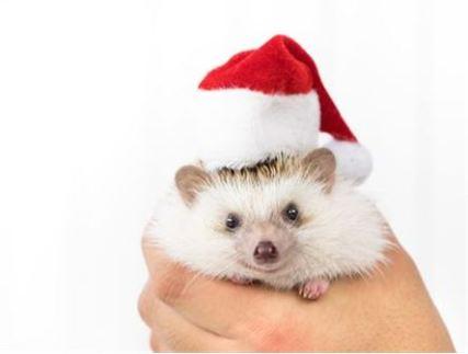 クリスマスコフレ 2019 gucci