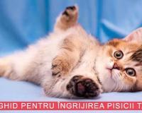 Mic ghid pentru îngrijirea pisicii tale