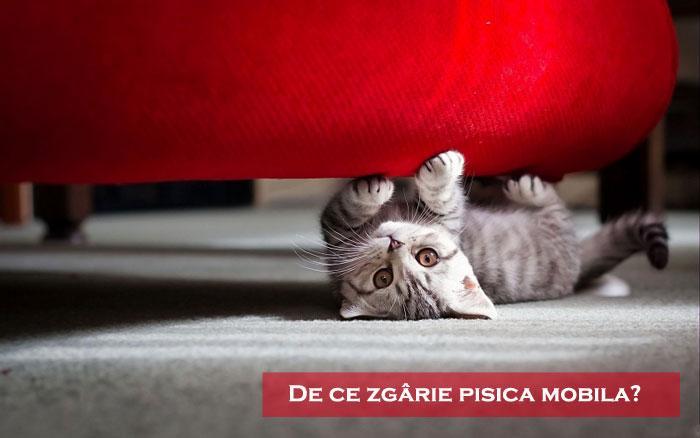 De ce zgârie pisica