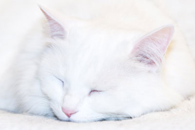 Pisica adoră să doarmă