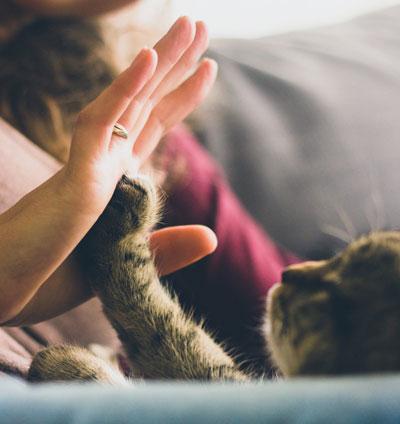 pisica-vrea-dragoste-atentie