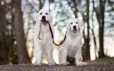 Haftpflichtversicherung für Haustiere