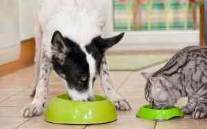 Tiertafeln: Hilfe für Bedürftige