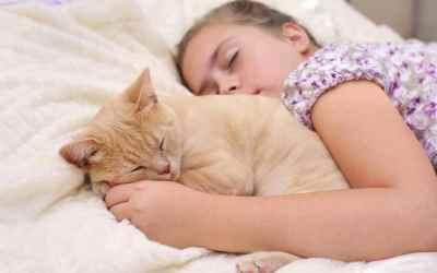 Katzen: Faszination Schnurren