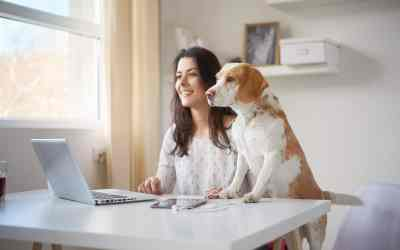 Formalitäten beim Hundekauf