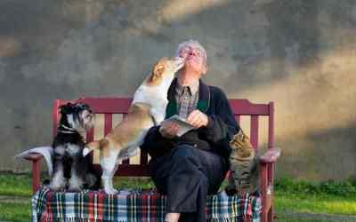 Wenn Haustiere in Pflegeheimen leben