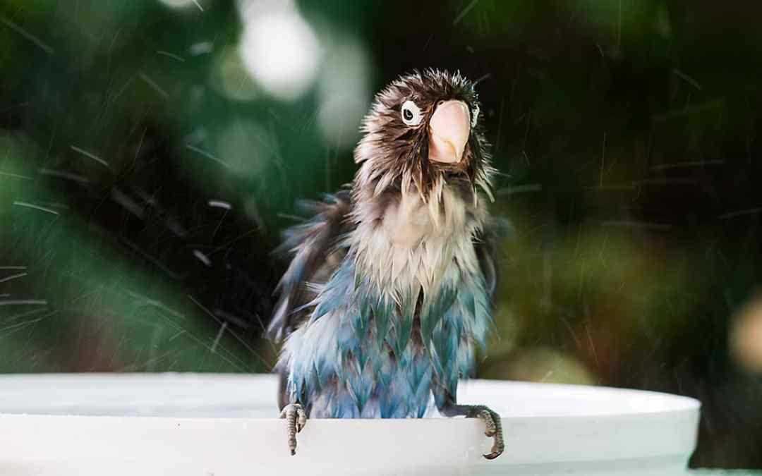 Badespaß für Ziervögel