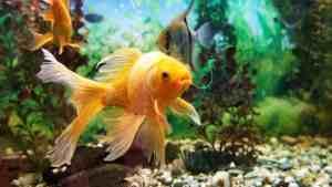 Aquarium reinigen - die besten Tipps