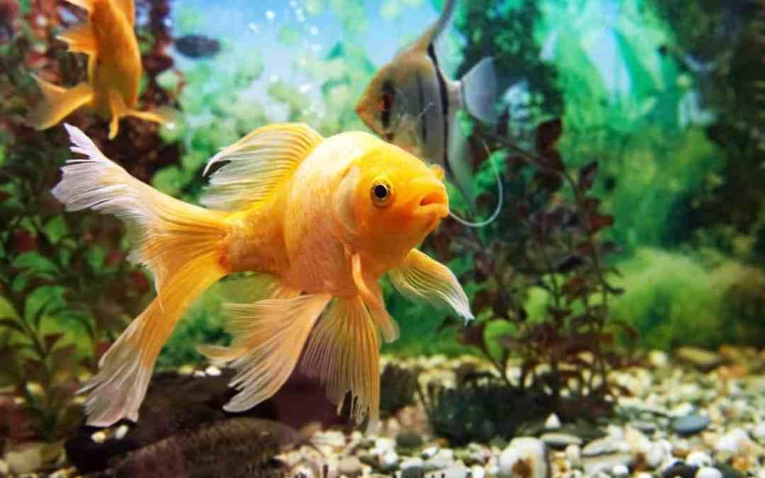 Aquarium reinigen – die besten Tipps
