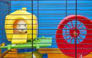 Kleintiere: Tierschutzwidriges Zubehör