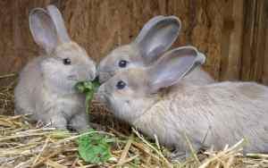 Kaninchen rundum glücklich