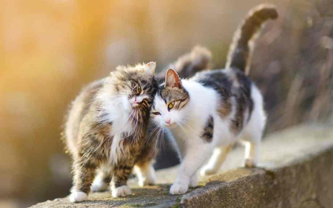 Brauchen Katzen Freigang?