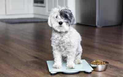Übergewicht beim Hund: was tun?