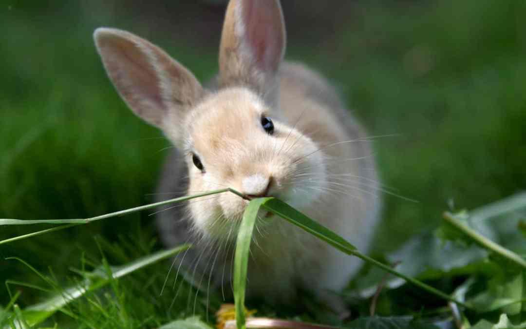 Warum wir Tierbilder so süß finden