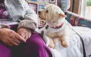 Was genau machen Therapiehunde?
