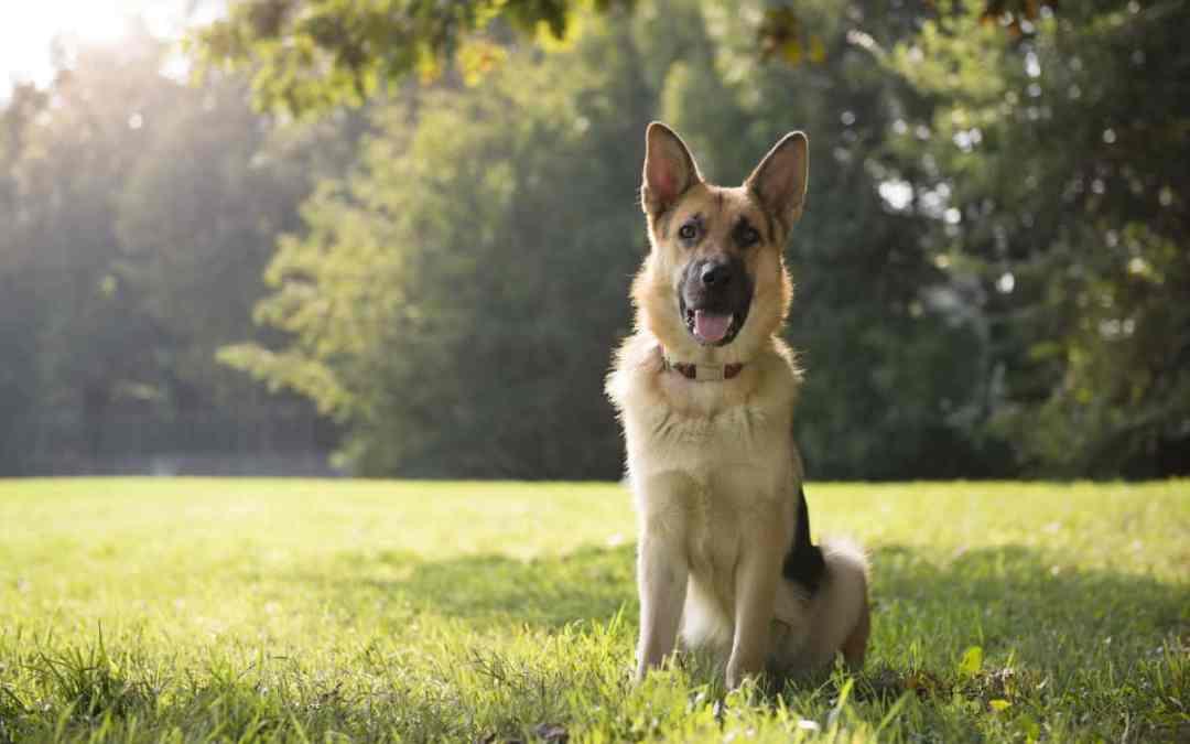 Test: Wie höflich ist dein Hund?