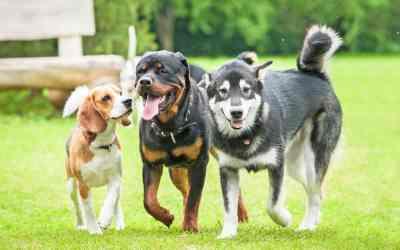 Was tun bei Arthrose beim Hund?