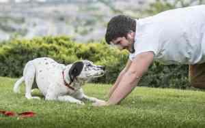 Erkenne, ob dein Hund zufrieden ist