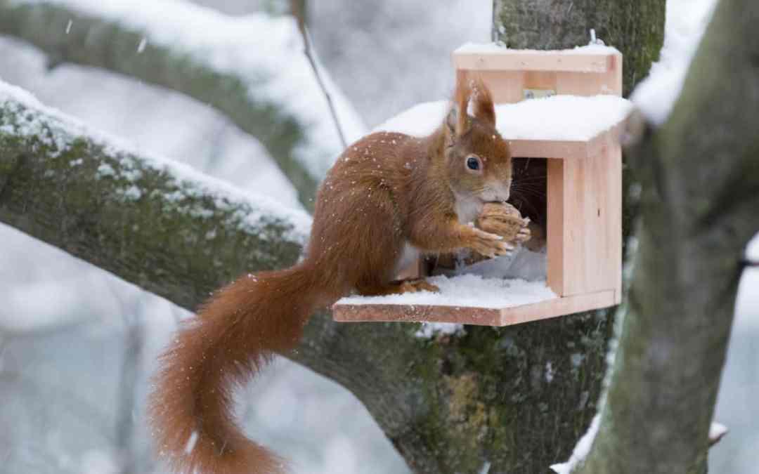 So hilfst du Eichhörnchen im Winter