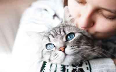 Catsharing – Katzenhaltung mal anders