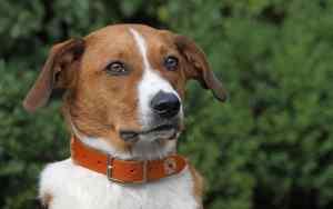 So findest du das beste Hundehalsband