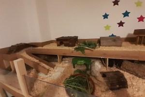 Eine Notstation für Meerschweinchen