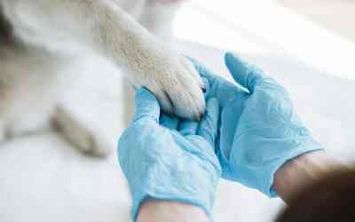 Hinter den Kulissen einer Tierarztpraxis