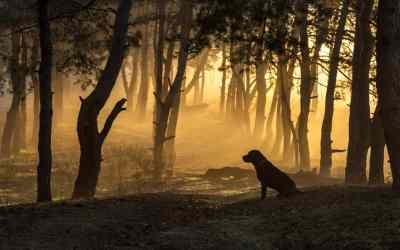 Haben Hunde ein Leben nach dem Tod?