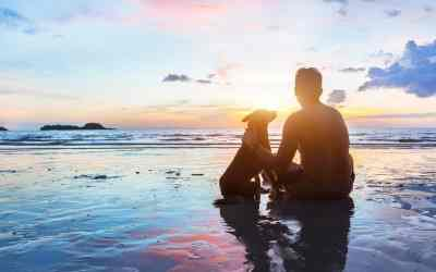 Einsam? Hundehalter in Coronazeiten