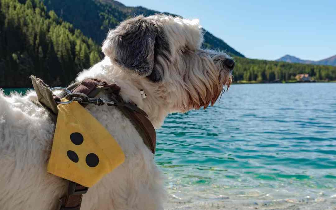 Tipps: Hilfe für deinen blinden Hund