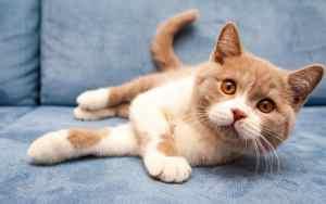 Verstehst du die Katzensprache?