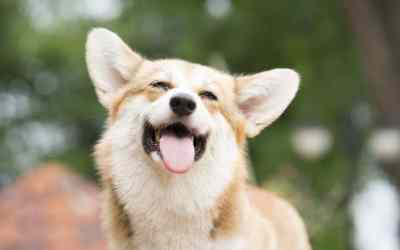 Wie Hunde ihre Emotionen zeigen