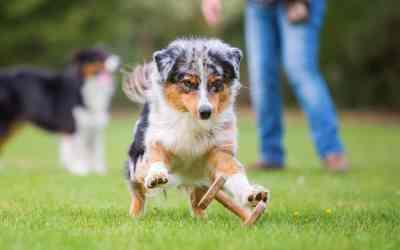 Ganzheitliches Online-Hundetraining