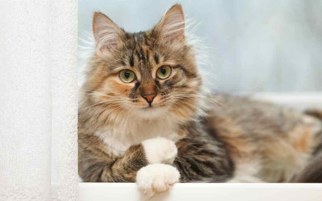 Wann muss die Katze zum Tierarzt?