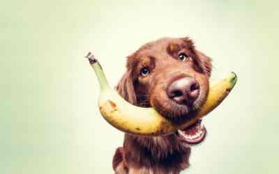 Darf ein Hund Bananen fressen?