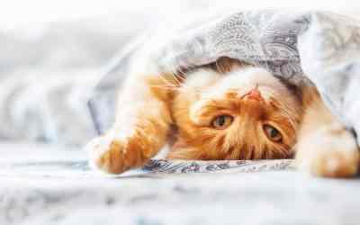Warum wollen Katzen mit ins Bett?