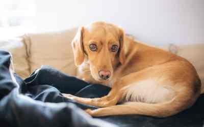 Wie erkennst du, ob dein Hund Schmerzen hat?