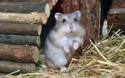 6 Tipps für artgerechte Hamsterhaltung